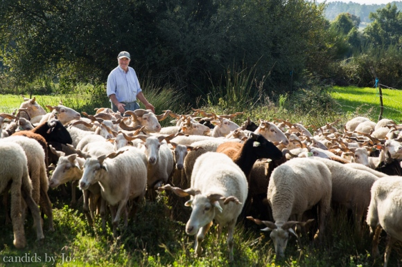 Queijo-Serra-da-Estrela-cheese-producer-Portugal-photo